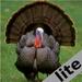Turkey Calls lite